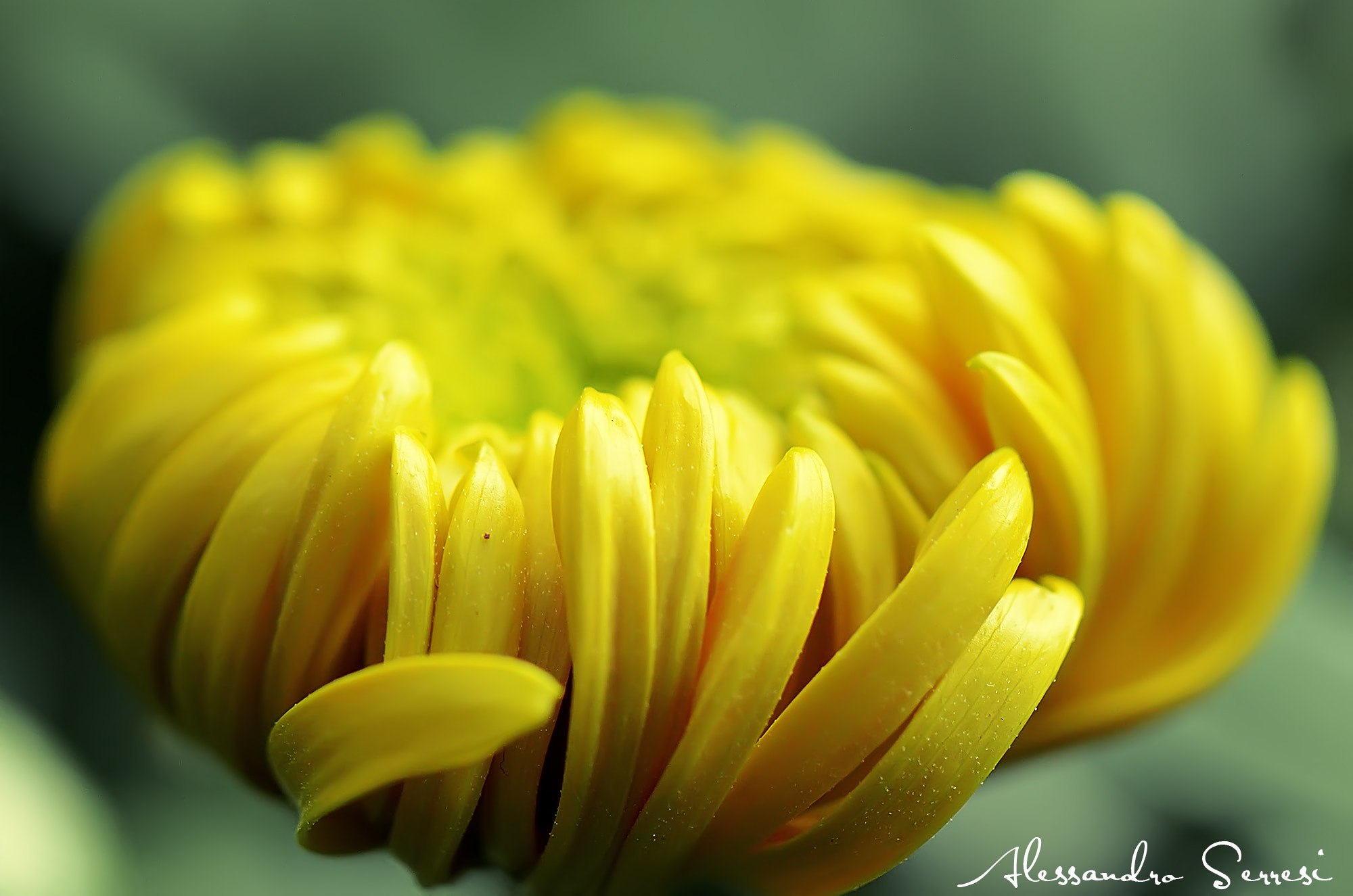 Photograph FLOWER by Alessandro Serresi on 500px