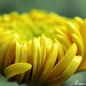 FLOWER by Alessandro Serresi (AlessandroSerresi)) on 500px.com