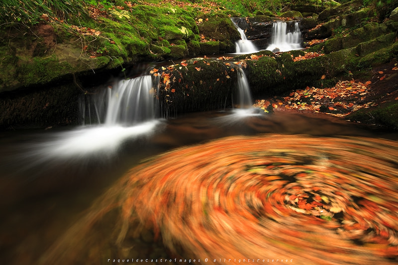 Photograph AUTUMN DANCE by Raquel de Castro on 500px