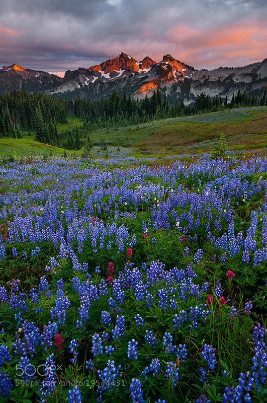 Photograph Tatoosh Range by Rick Lundh on 500px