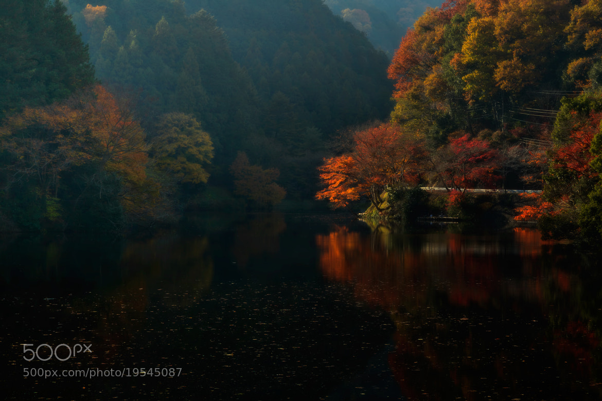 Photograph Some colorful trees by MIYAMOTO Y on 500px