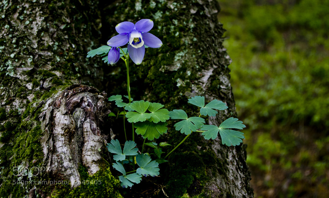 Photograph beautiful flower by Jungyun Ham on 500px