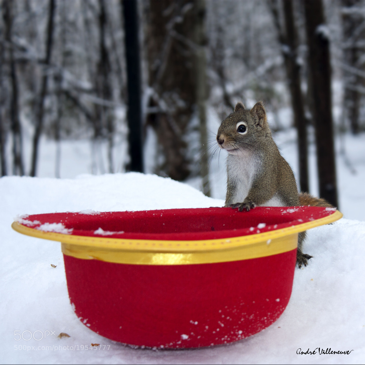 Photograph The magic red hat by Andre Villeneuve on 500px