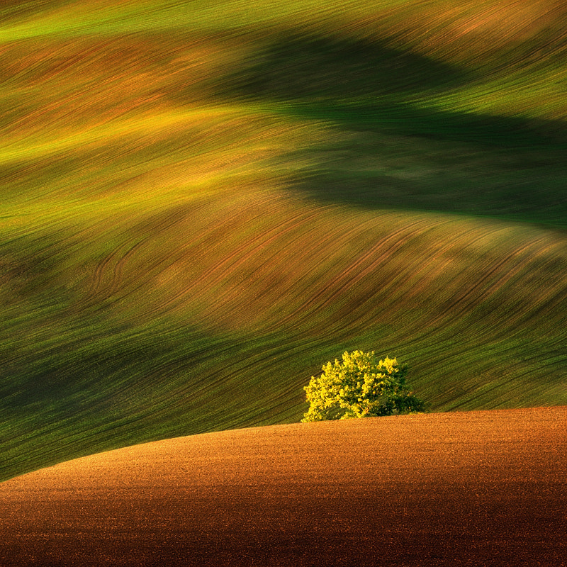 Photograph The Tree... by Pawel Kucharski on 500px