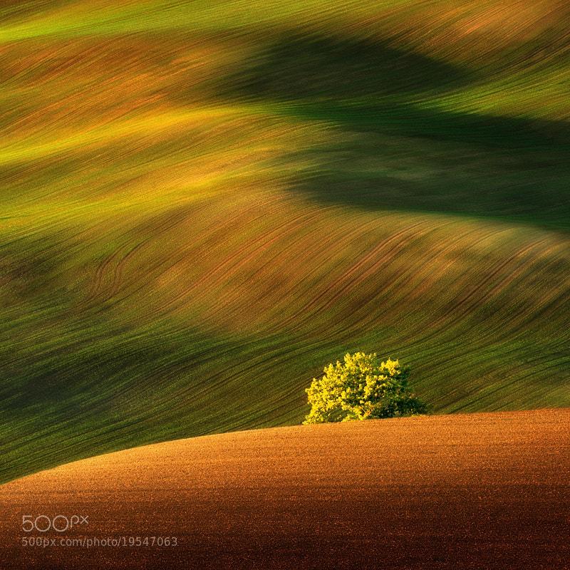 Photograph The Tree... by Pawel Kucharski on 500px