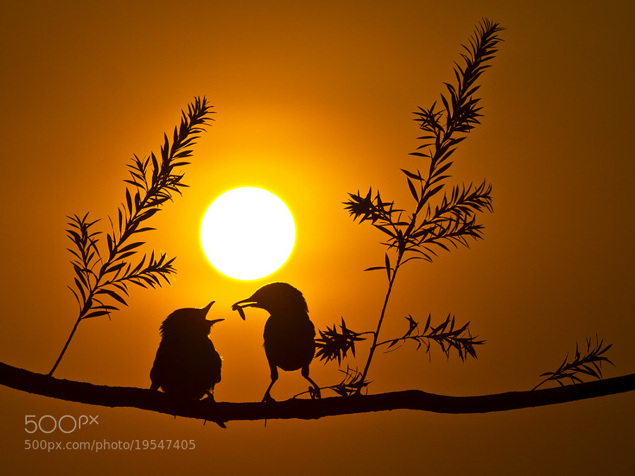 Photograph - - Silhouette - - by SIJANTO NATURE on 500px