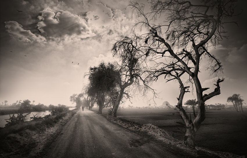 Photograph The country's roads by Jenya Sayfutdinov on 500px