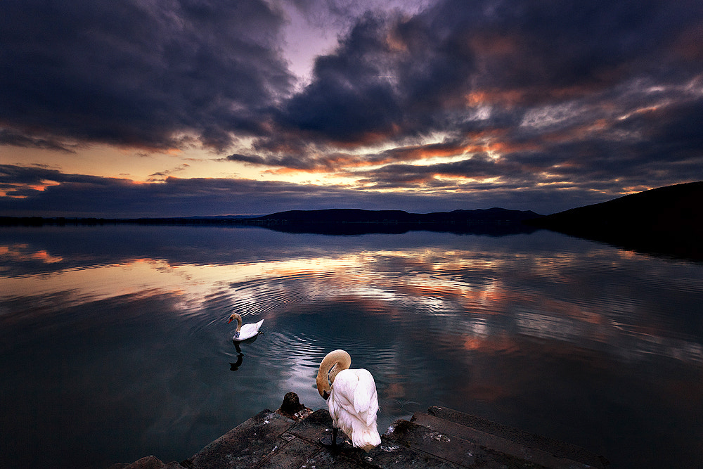 Photograph Swan lake by Christos Lamprianidis on 500px