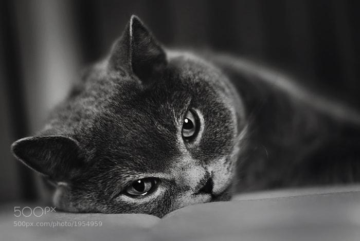 Photograph *** by Nina Glebova on 500px