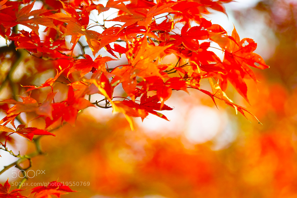 Photograph Foliage by marbee .info on 500px