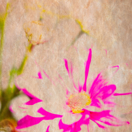 Flowers, Canon EOS 6D, Canon EF 135mm f/2.8 Soft