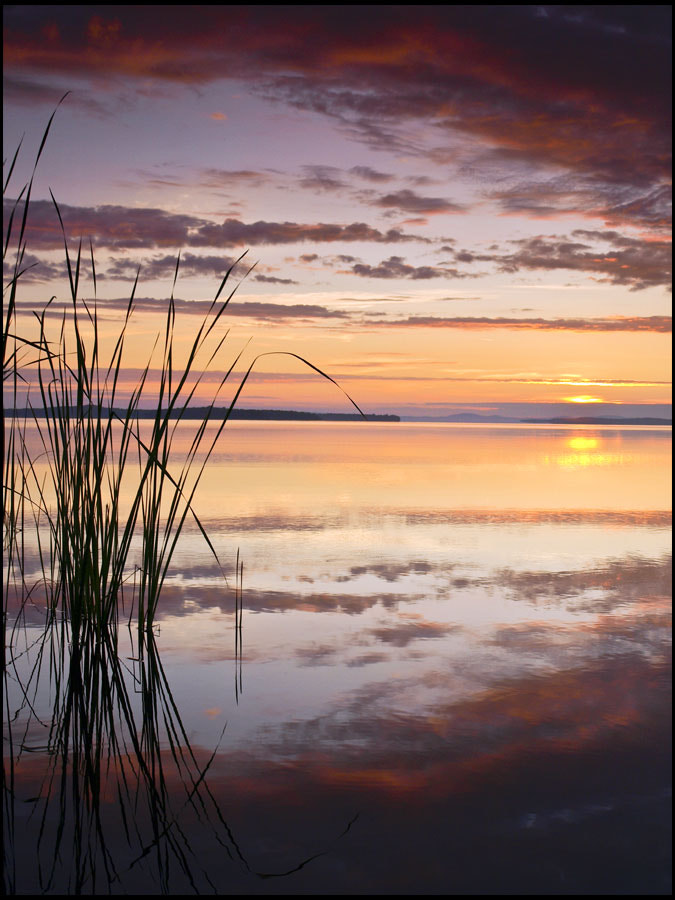 Photograph Cattails by Peter Baumgarten on 500px