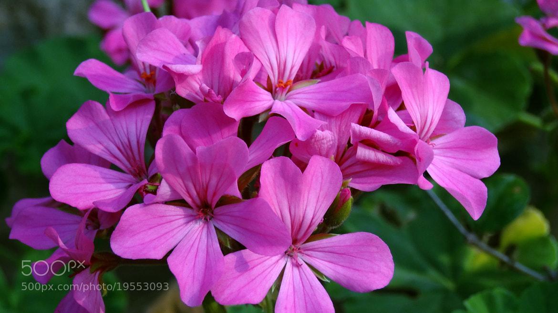 Photograph Magnifique fleur  by Ravi Shankar on 500px