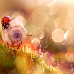 Magic of light by Magda Wasiczek (MagdaWasiczek1)) on 500px.com