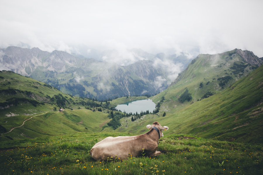 Living the easy life and enjoy your weekend. by Johannes Hulsch on 500px.com