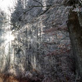 ... noch ein Winterbild