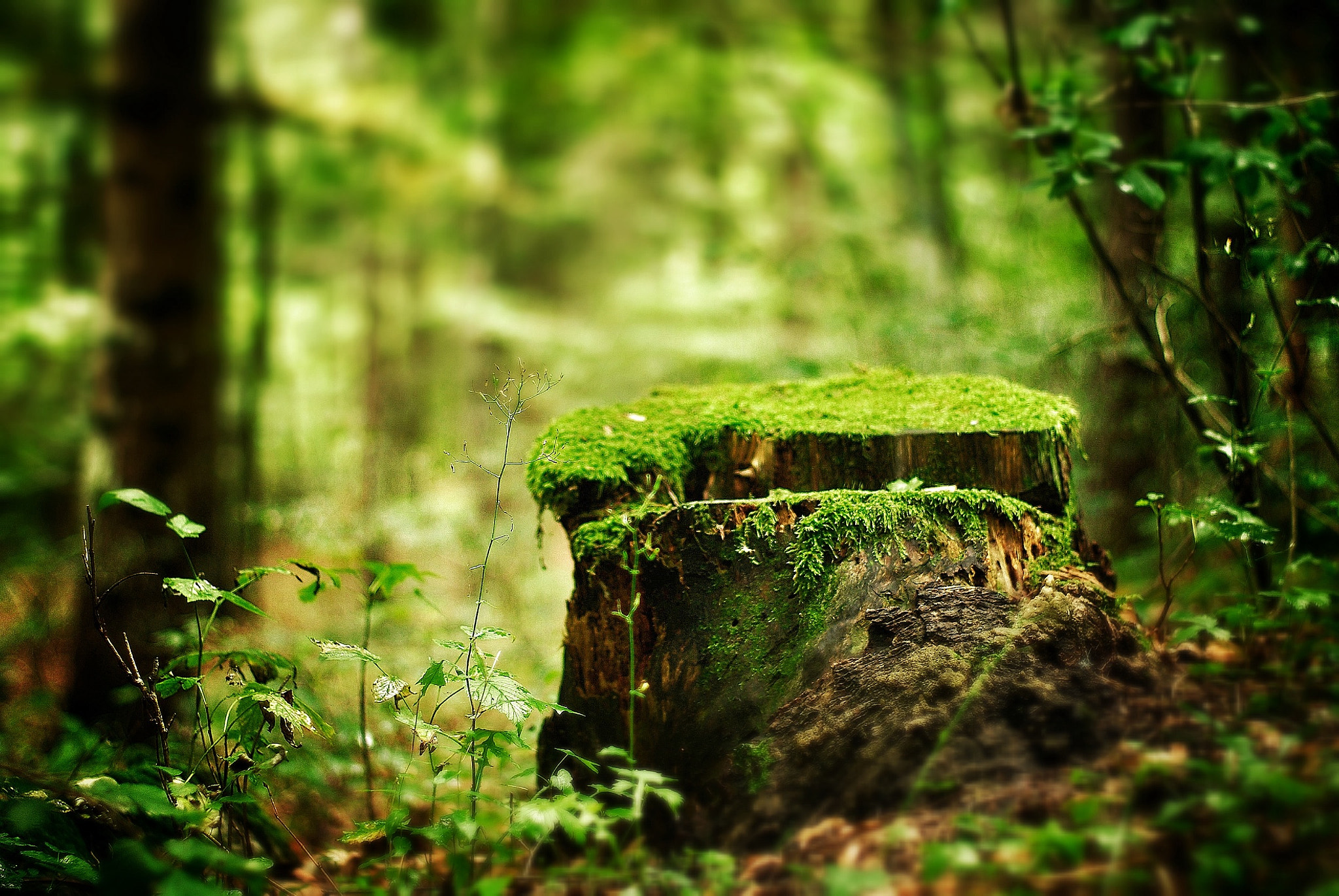 Photograph In the forest by Francesco Zambotti on 500px