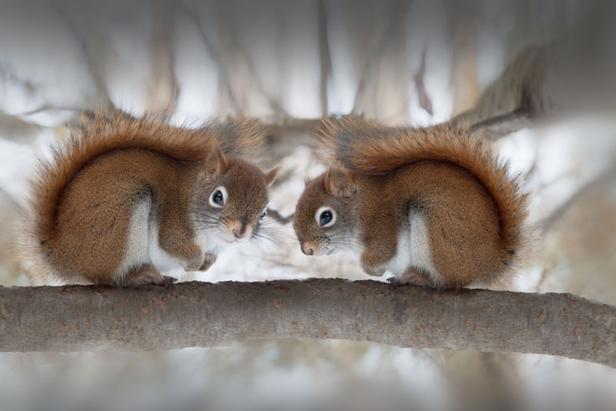 Look at me by Andre Villeneuve on 500px.com
