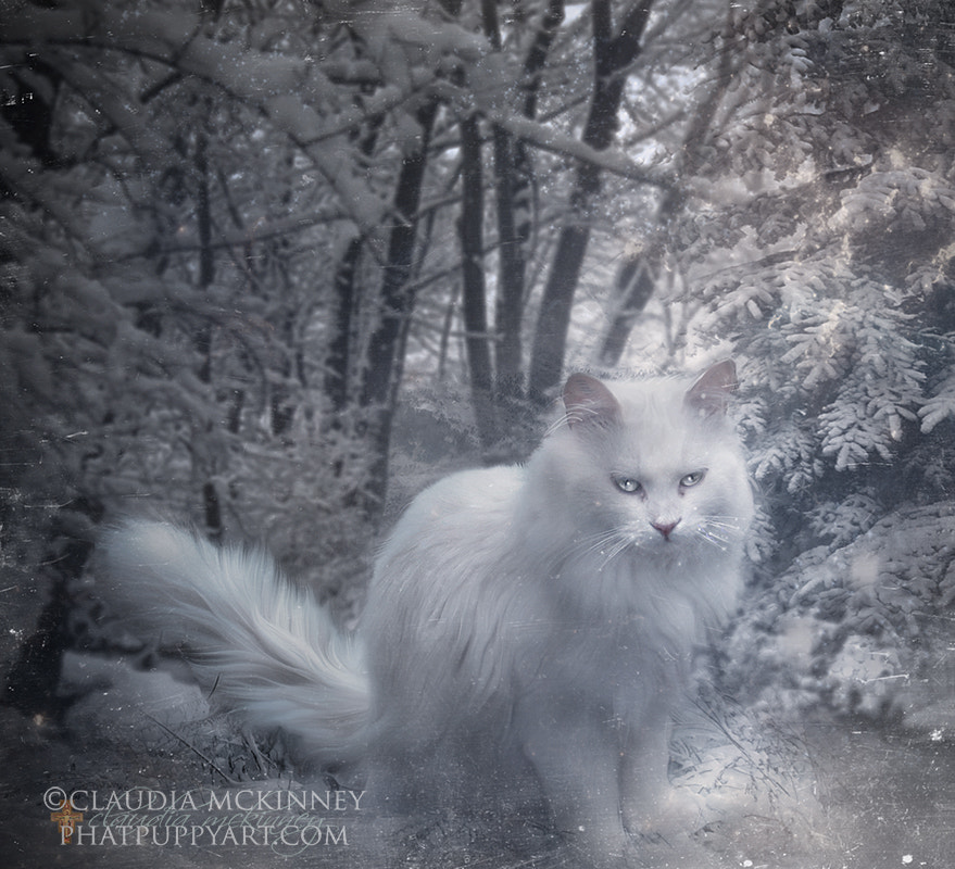 Photograph Snowball by Phatpuppy Art on 500px
