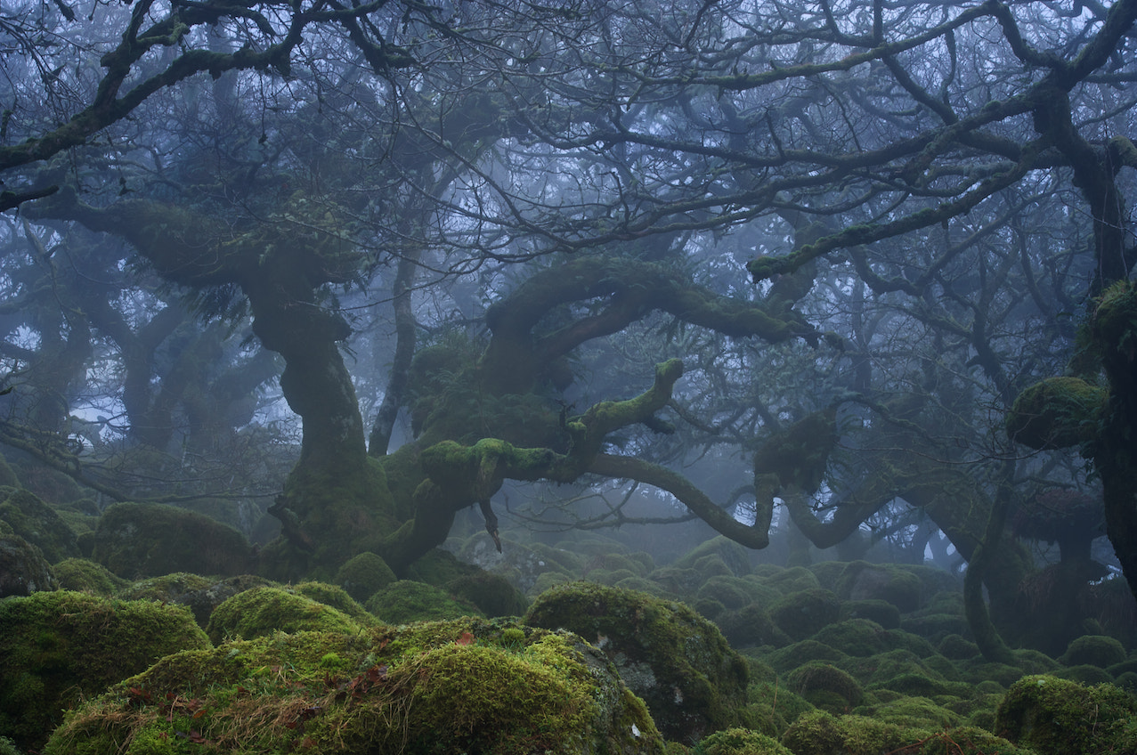 Photograph Into the Mystic by duncan george on 500px