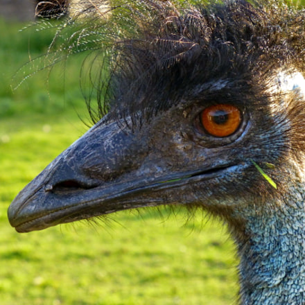 Ostrich Stylish Hairstyle for, Panasonic DMC-ZS19