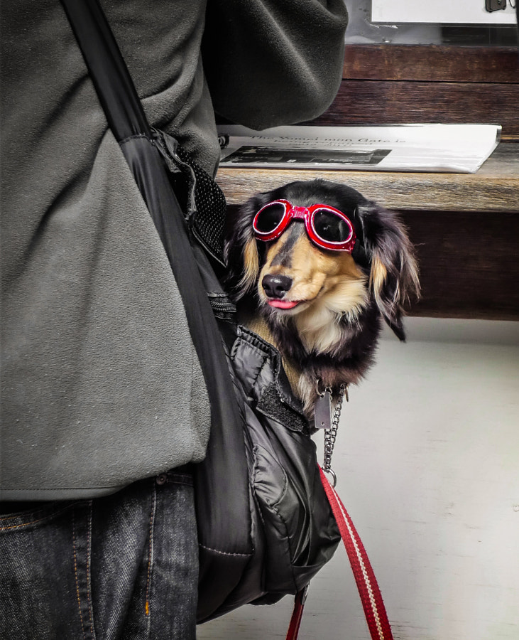 cool dog by fam adl on 500px.com