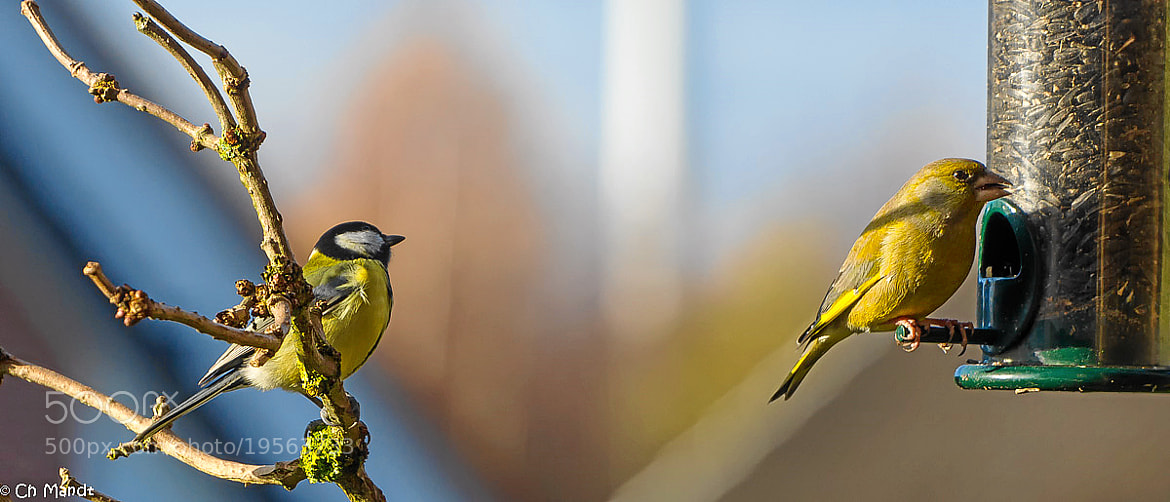Photograph Ich warte by Christian Mandt on 500px