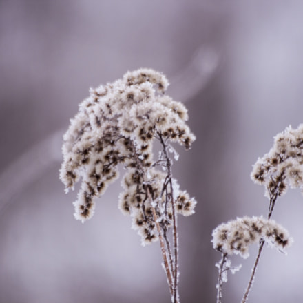 Winter wonderland, Canon EOS 500D, Sigma 70-300mm f/4-5.6 [APO] DG Macro