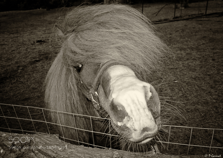 Photograph Pony ~ Greece by Garmatis Pantelis on 500px
