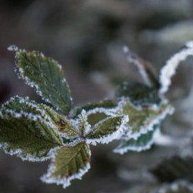 Photograph frozenGreen by Lukas Bachschwell