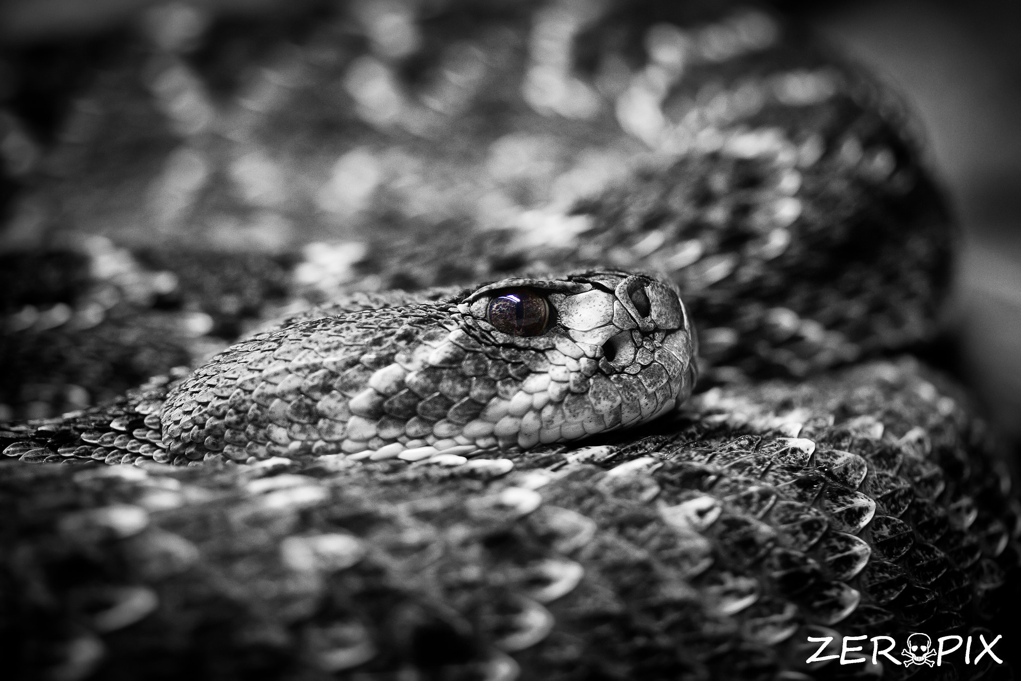 Photograph All coiled up by ZeroPix Photography on 500px
