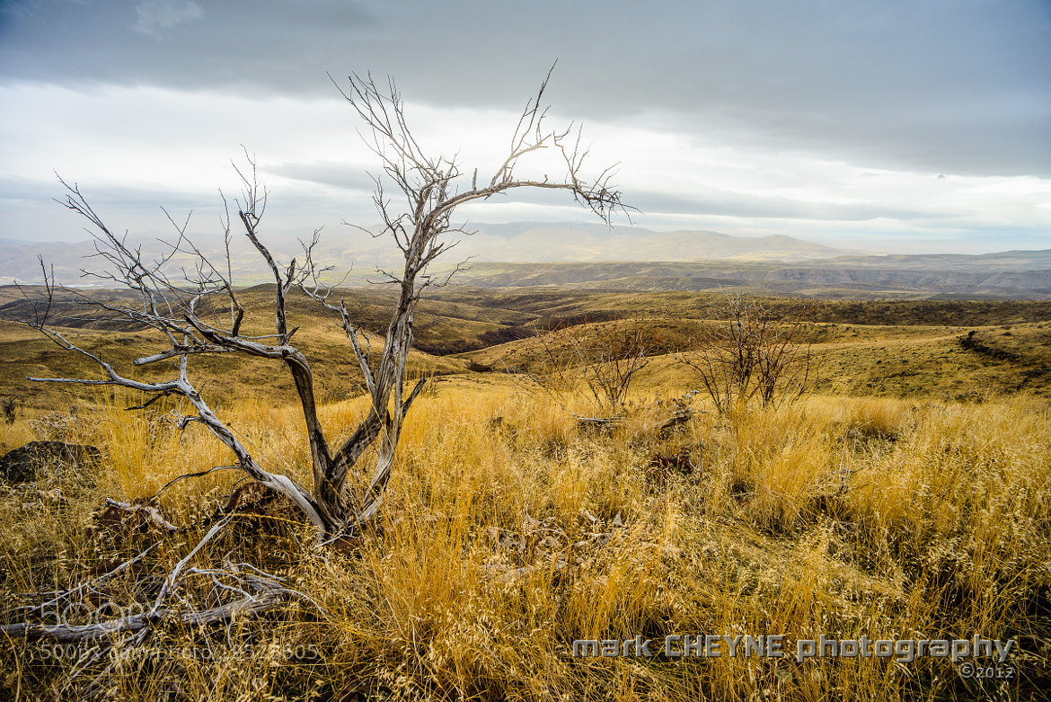 Photograph Bush With a View ii by Mark Cheyne on 500px