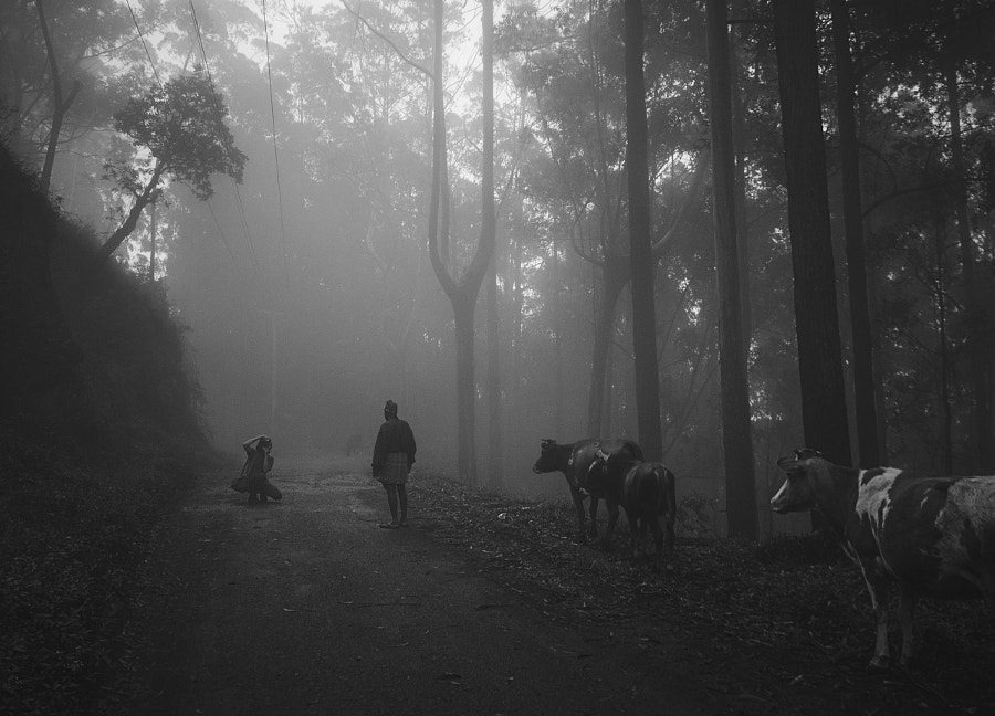 Poseurs in the Mist by Son of the Morning Light on 500px.com