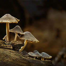 Fungi Group by Mark Shoesmith (MShoey)) on 500px.com