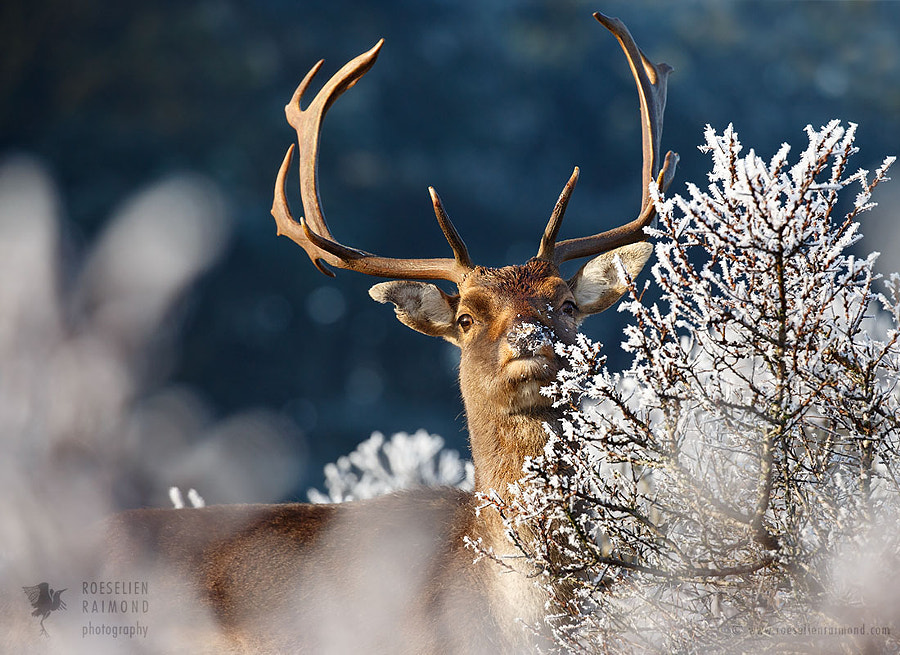 Powder Nose by Roeselien Raimond on 500px.com