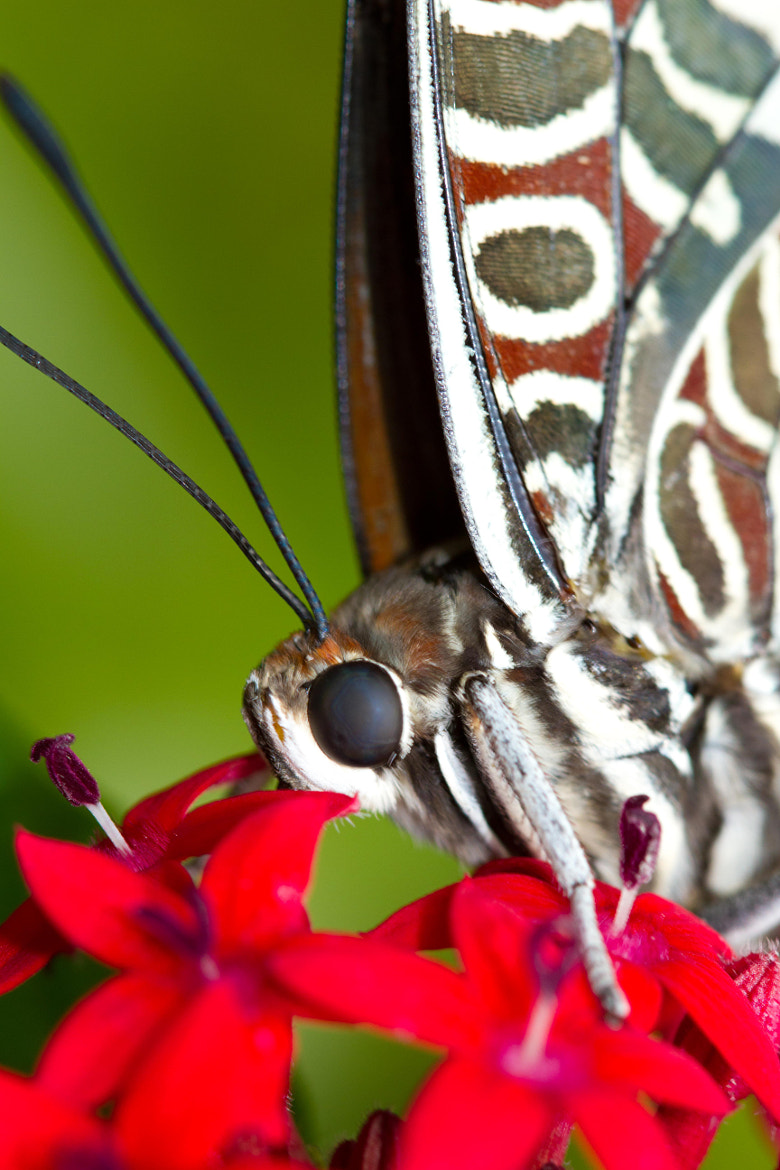 Photograph I See You Butterfly by John Hoey on 500px