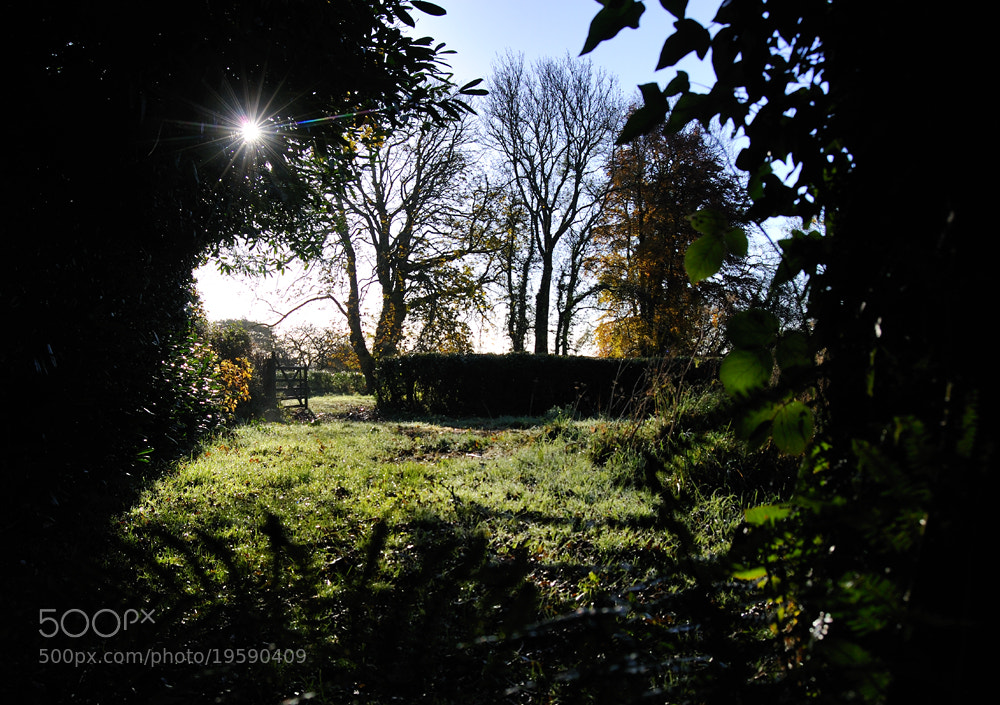 Photograph Low autumn light by Kevin  Keatley on 500px