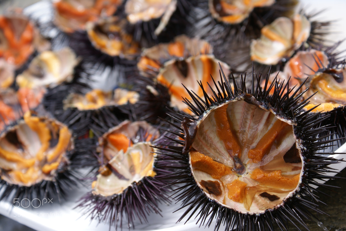 Photograph Sea urchin by Victoria Rodriguez on 500px