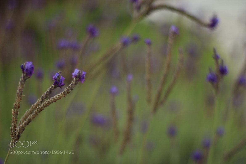 Photograph Flower by Sanjeev Jain on 500px