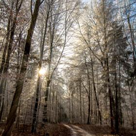 ... a winterway near ilm #2