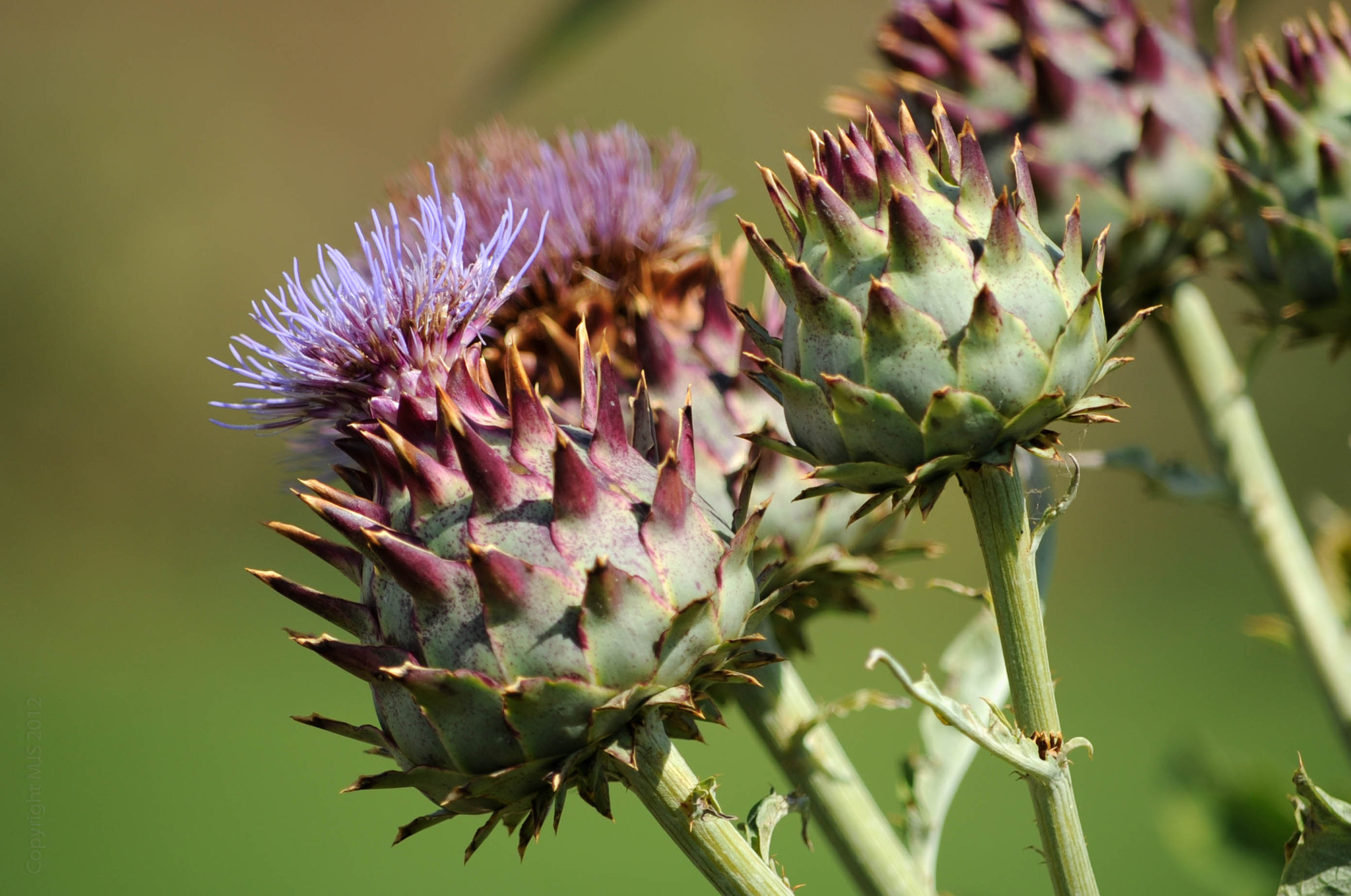 Photograph Thistles, Wrest Park by Mike Smith on 500px