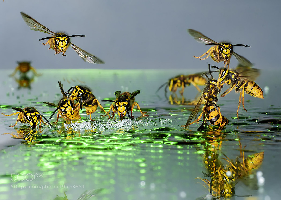 Photograph Lunching and Disputes by Wolfgang Korazija on 500px