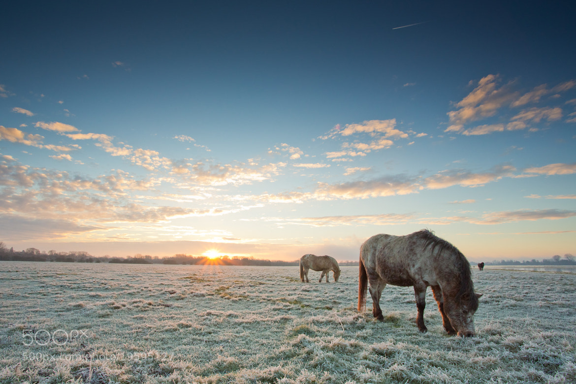 Photograph Sunrise Graze by Andrew Douglas on 500px