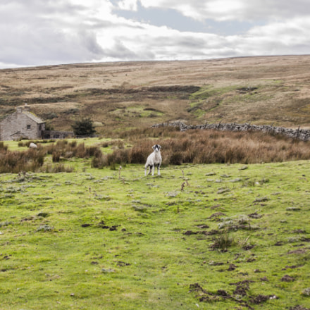Sheepside, Canon EOS 50D, Canon EF 28-105mm f/4-5.6