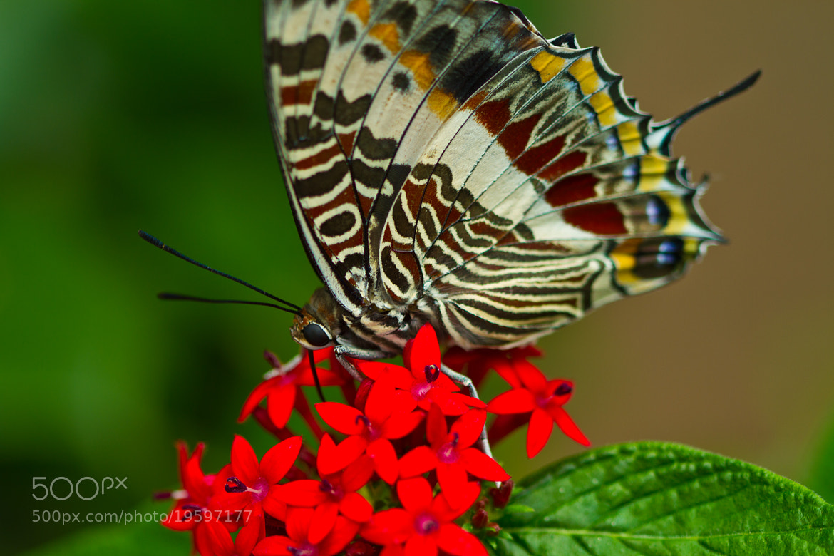 Photograph I See You Butterfly (eating) by John Hoey on 500px
