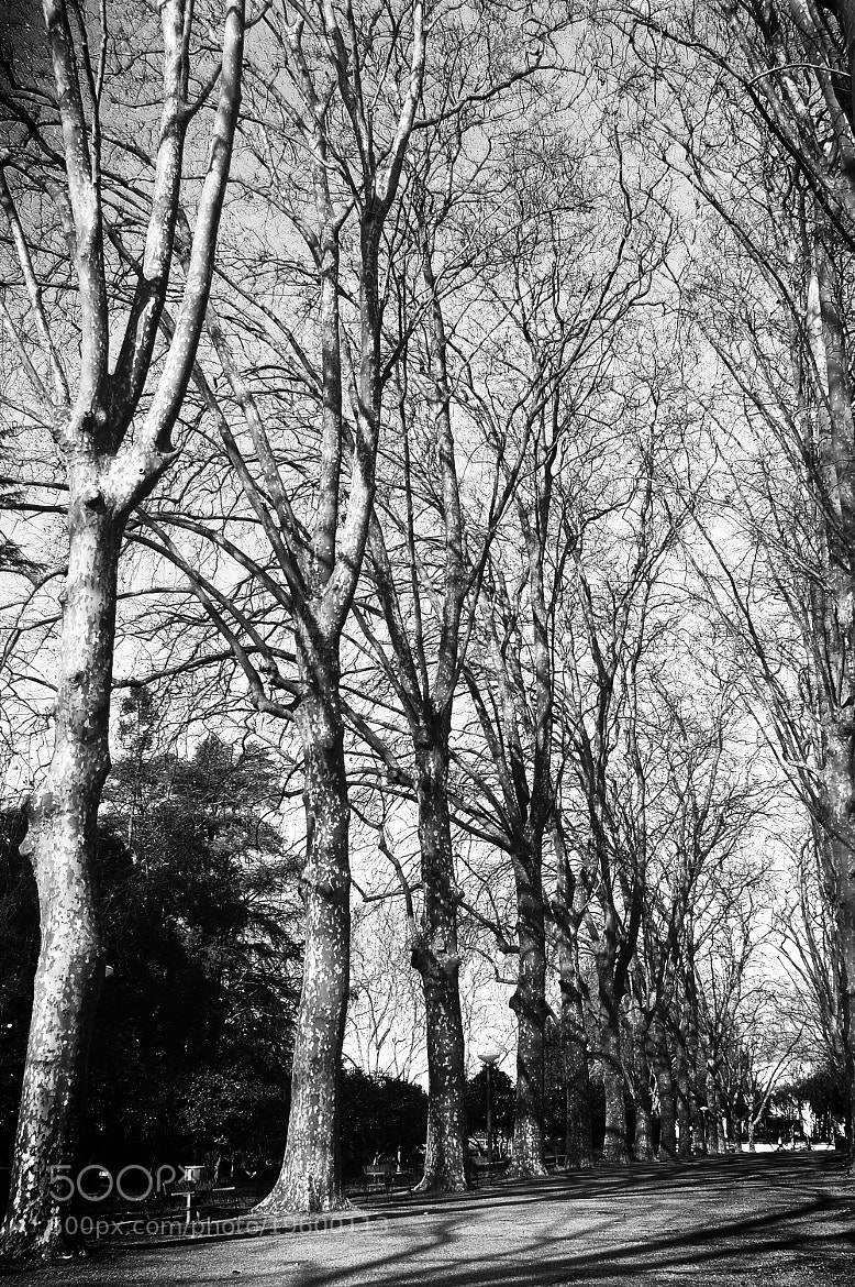 Photograph Trees by Alexandra Serban on 500px