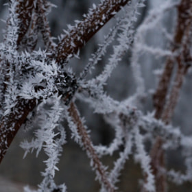 Photograph iceSpikes by Lukas Bachschwell