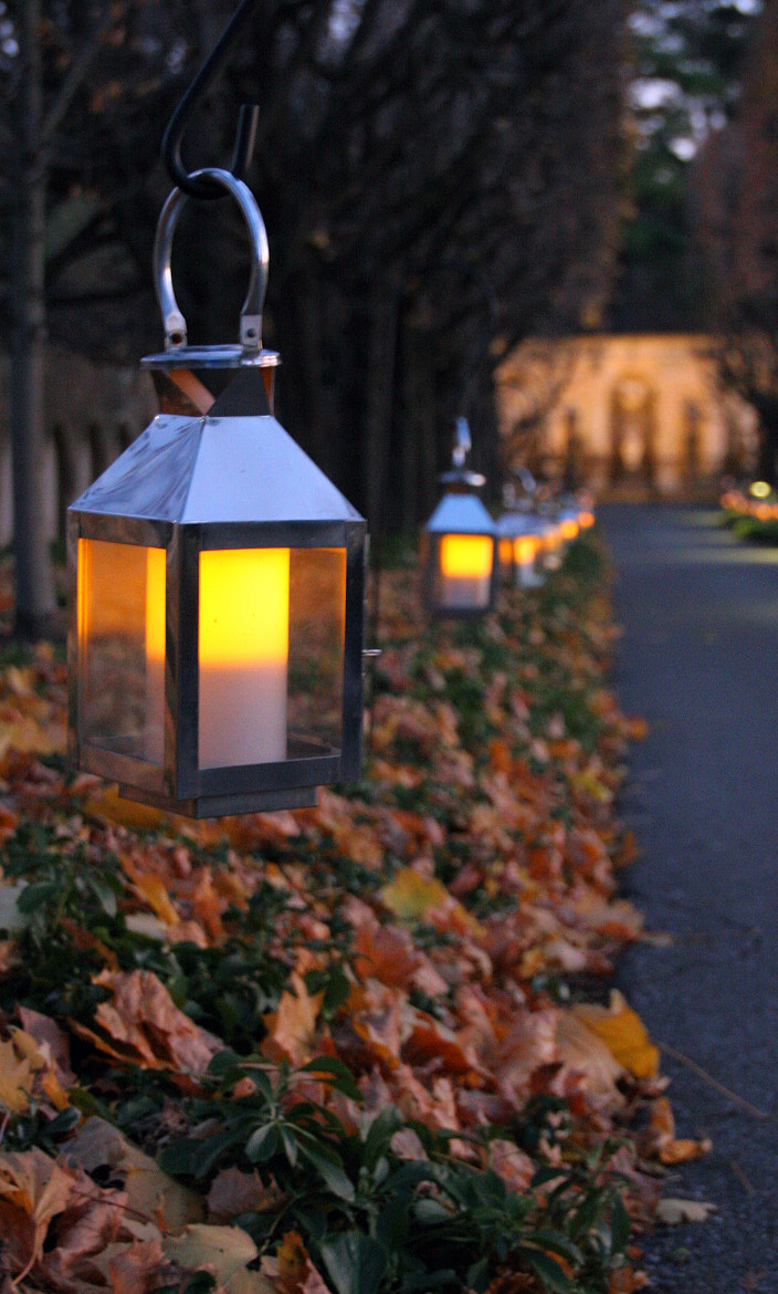Photograph Lanterns 2 by Brian Fitzgerald on 500px