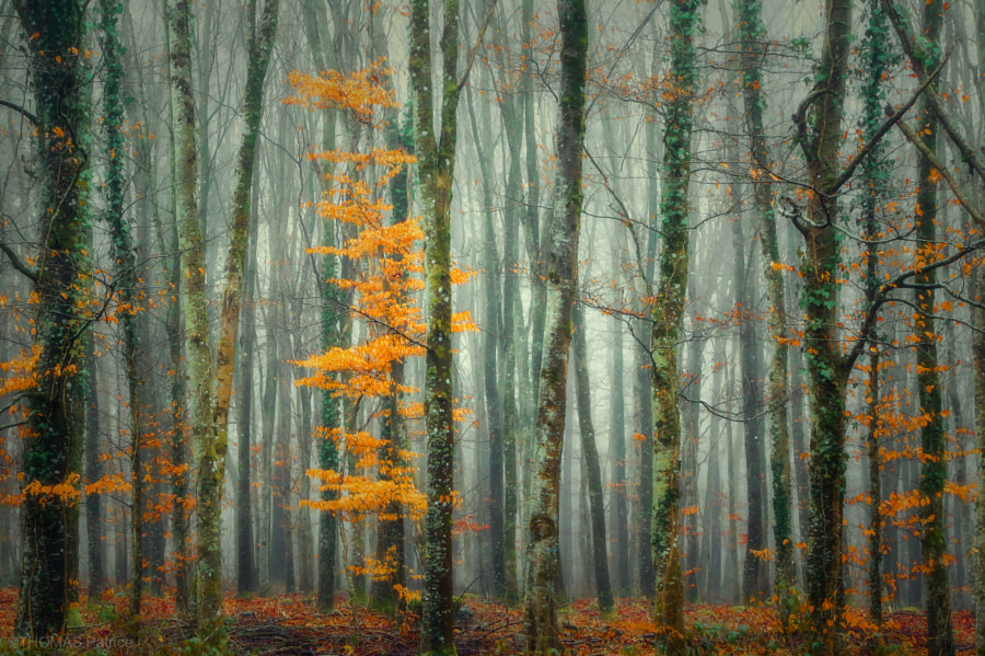 A rest of autumn! by Patrice Thomas on 500px.com