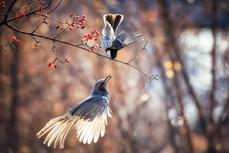 It is mine by nature photographer Jaewoon U on 500px.com